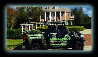 Bat Removal Tennessee - Animal pros